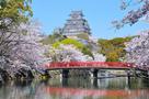 城見橋からの桜と大天守(改修前)…