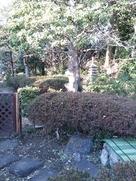 主郭南西土塁と庭園…