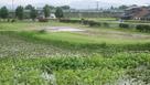 右郭前の水堀と蓮…