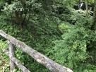 土橋の上から堀を望む…