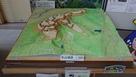 杉山城模型