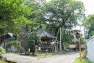 根古屋神社の大ケヤキ…