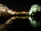堀端の夜桜