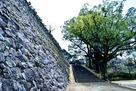 「千人殺し」石垣横の本丸登城口…