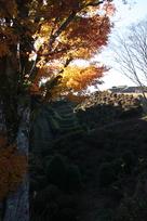 紅葉と空堀