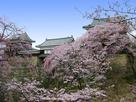 上田城跡公園と桜…