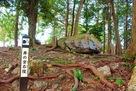 井伊谷城 井の宮石陵…