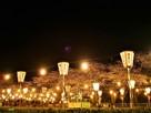 桜まつり(夜)…