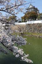 春の岸和田城の桜と堀(2014年)…