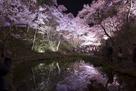 水面に映る夜桜(鏡面桜)…