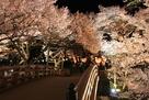 夜桜と桜雲橋