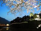 島原城と夜桜