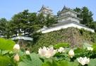 島原城の蓮の花…