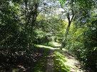 鎮守の森散策路…