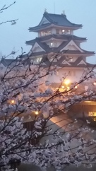 夜の城と桜
