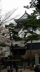 天守と桜と松