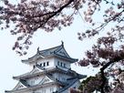 天守閣と桜(姫路動物園内から)…