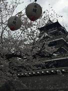 提灯と桜と天守…