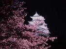 夜桜と天守閣の横顔…