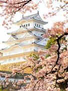 桜の間から天守閣を覗けば…