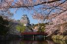桜景色に包まれて…