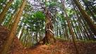 虎口に立つ御神木…