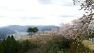 桜と竹田城