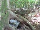 尾根登山道2