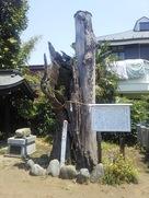 御神木に纏わる伝説-蜻蛉の寄生木…