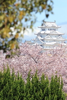 中濠から見える桜…