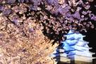 西の丸庭園からのブルーライトアップ…