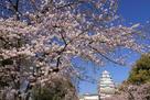 姫路城、陽光に輝く…