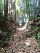 竹林の中を行きます…
