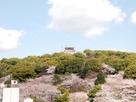 桜の小牧山