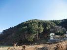 林小城遠景