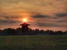 夕陽と赤米