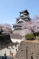 桜咲く熊本城(2015年)…