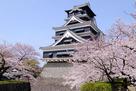 桜と熊本城天守(2015年)…