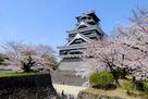 熊本城と桜(2015年)…