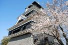 桜越しに熊本城を斜めの角度から…