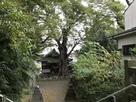 城山稲荷神社と大きなケヤキ…