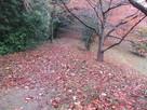 紅葉(曲輪)