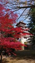 紅葉が綺麗でした。…