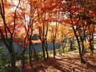 紅葉と外堀石垣…
