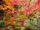 紅葉◆庭園