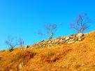 本丸石垣◆横側…