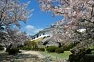百間廊下と桜