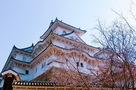 秋の桜と姫路城…