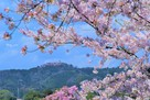 津山城からの城址遠景…