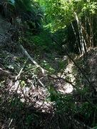 旧本丸 松尾城 登山道に木が倒れて攻城不…